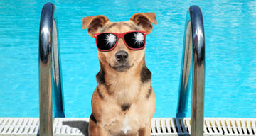 Dogs Unleashed Daycare Pet Resort Boarding And Spa